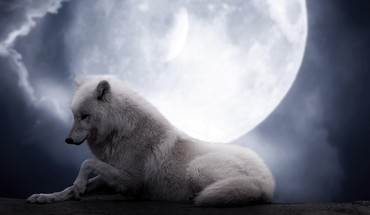 Animals moon in love wolves HD wallpaper