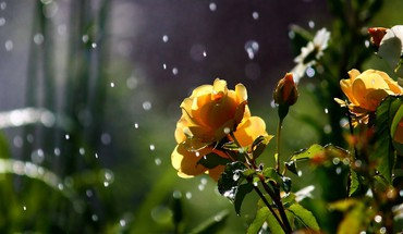 Nature flowers in the rain HD wallpaper