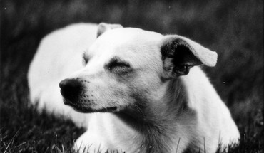 Black and white animals grass dogs monochrome HD wallpaper