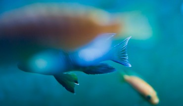 Abstract fish HD wallpaper