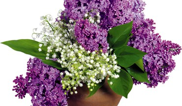 Lilac and white flowers HD wallpaper