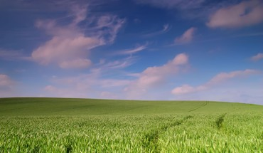 Landscape of grass HD wallpaper