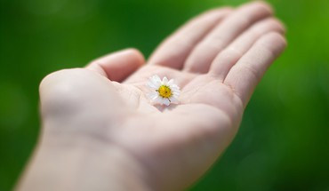 Blume in der Hand HD wallpaper