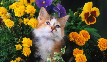 Kitten among the garden HD wallpaper
