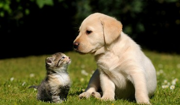 chats Nature Animaux Chiens  HD wallpaper