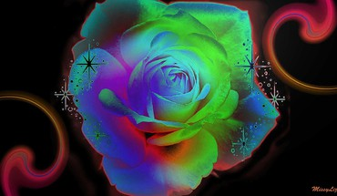 Bright roses HD wallpaper