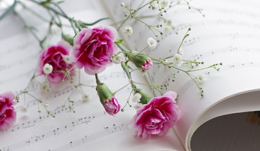 Pink flowers and music HD wallpaper