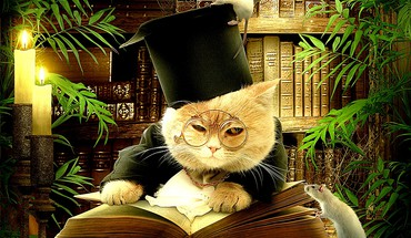 Sir Professor mr kitty  HD wallpaper
