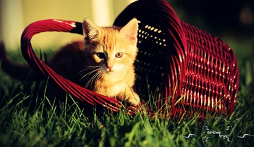 Animals baskets grass nature HD wallpaper