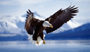 Mountains flying birds eagles blurred background HD wallpaper
