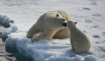 Mommy polar bear kissing baby baby HD wallpaper