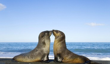 Two seal kiss HD wallpaper