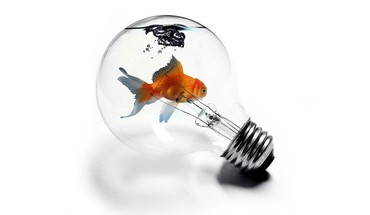 Bulbs fish light HD wallpaper