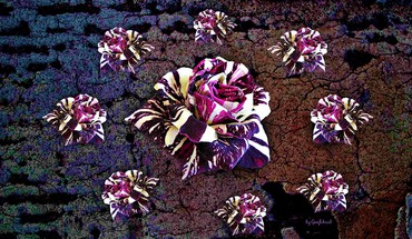 Variegated roses collage HD wallpaper
