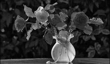 Still life in black and white HD wallpaper