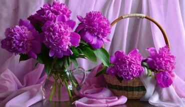 Purple peonies HD wallpaper
