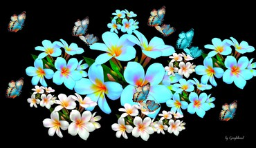 Plumeria and butterflies collage HD wallpaper