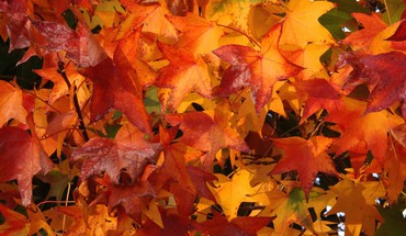Photo fall colors HD wallpaper
