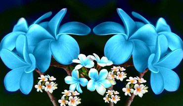 Fantasy plumeria collage  HD wallpaper