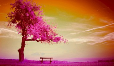 Lonely bench HD wallpaper