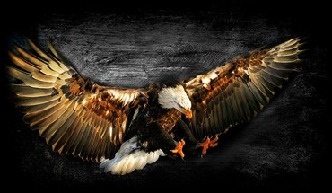 Bald eagle work of art HD wallpaper