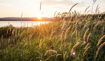 Sunset nature wheat plants sunlight HD wallpaper