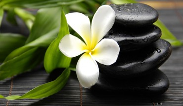 Flowers leaves stones plumeria HD wallpaper