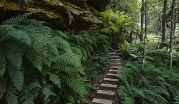 Australia ferns national park new south wales HD wallpaper
