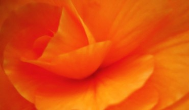 Nahaufnahme Blumen orange  HD wallpaper