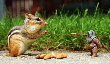 I want these nuts HD wallpaper