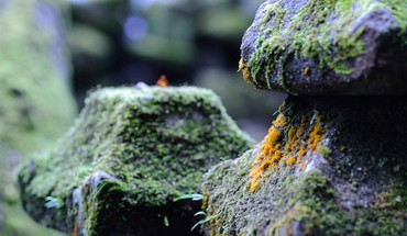 Japan stones moss depth of field HD wallpaper