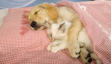 Dog and cat HD wallpaper