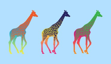 Colors giraffes HD wallpaper