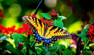 Butterfly and garden flowers HD wallpaper
