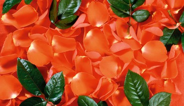 Orange leaves flower petals background HD wallpaper
