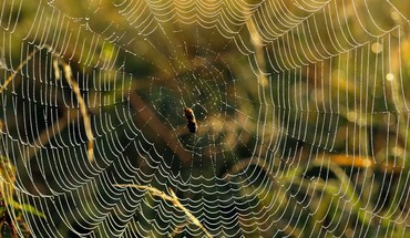 Spiders Spinnentiere  HD wallpaper