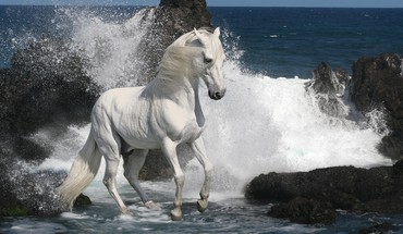 Southern animals horses sea HD wallpaper