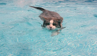 Animals cats swimming water HD wallpaper