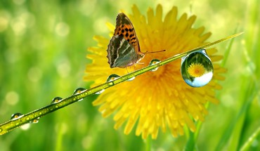 Green nature drop macro sunflowers butterfly wings butterflies HD wallpaper