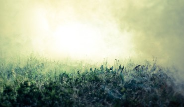 Grass fog macro HD wallpaper