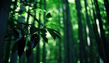 Green wood leaves summer hieroglyphs branch HD wallpaper