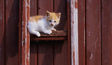 Naughty kitten HD wallpaper
