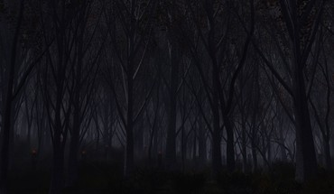Eyes trees autumn dark night wood forest HD wallpaper