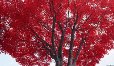 Trees autumn (season) red HD wallpaper
