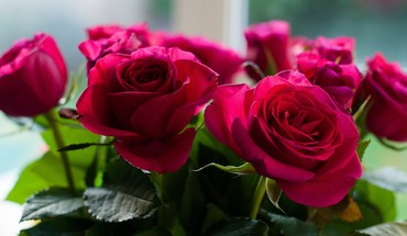 Flowers roses HD wallpaper