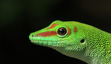 Lizards HD wallpaper