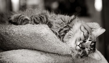 Animals cats kittens monochrome outer space HD wallpaper