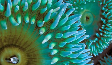 Nature macro sea anemones HD wallpaper
