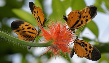 Nature insectes fleurs orange floue papillons de fond  HD wallpaper