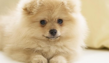 Animaux chiens sourire  HD wallpaper